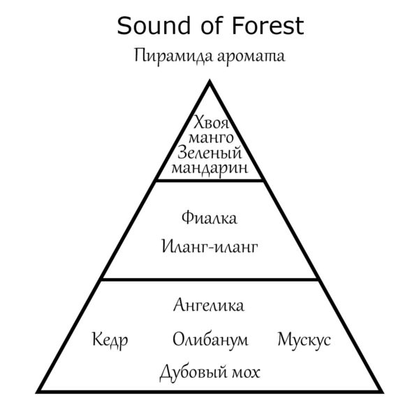 Пирамида аромата Sound of Forest